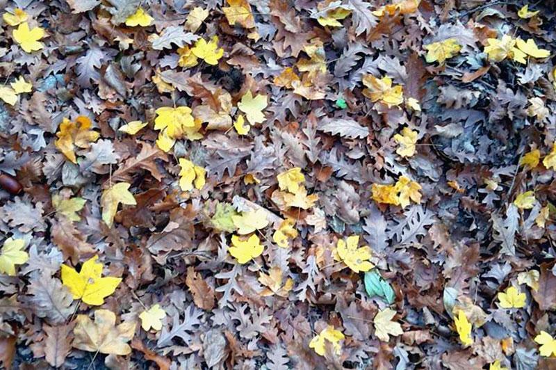 eventi-alla-locanda_-articoli_-blog_-in-zona_foglie